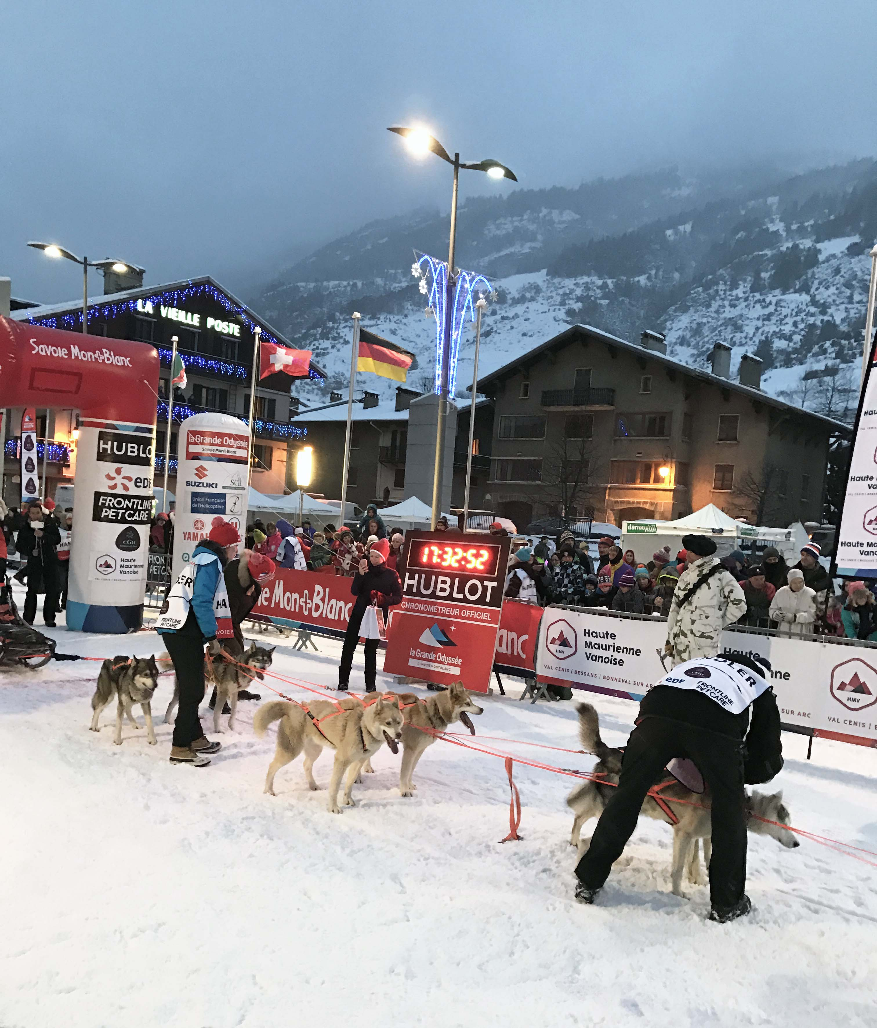 course musher chien